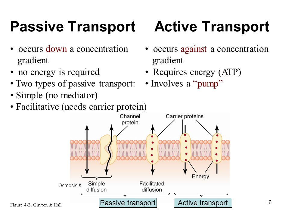 types of passive transport yglesiazssa