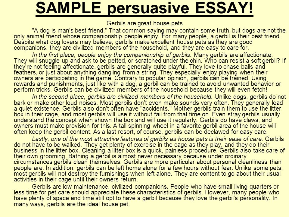 essays on pets drafting outline of a sample persuasive essay ppt an - Persuasive Essay Example