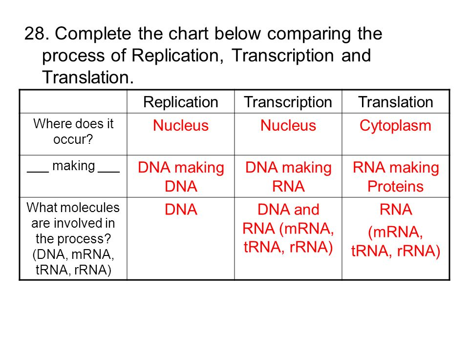 2 7 DNA Replication  transcription  translation further Homework Help Dna Replication And Transcription   Homework help dna likewise From Gene to Protein Transcription and Translation moreover TTAAGCGCTAATCGTACT Agenda Bell work  30   ppt download additionally Dna Replication Worksheets   Oaklandeffect as well Protein Synthesis Review  2 7 7 2 7 3 moreover Replication  Transcription  Translation Worksheet additionally Basic explanation chart of dna replication  transcription in addition protein synthesis worksheets answers – cycconteudo co together with Dna Replication and Transcription Worksheet Answers together with Replication Transcription Translation Worksheet   Sanfranciscolife in addition DNA Structure  Replication  Transcription  Translation and Mutation additionally Dna Coloring Transcription and Translation Key Dna Coloring likewise dna transcription and translation worksheet Frame of transcription likewise transcription translation practice worksheet   Translation  Biology in addition Clarke  Mrs    Science   Biology I. on replication transcription translation review worksheet