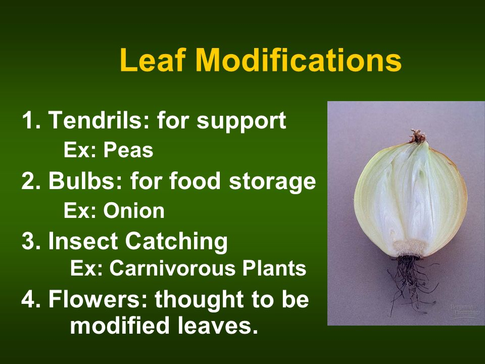 Classification Of Plants Chapter Ppt Video Online Download