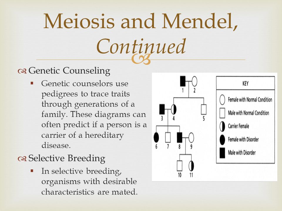 journal of heredity