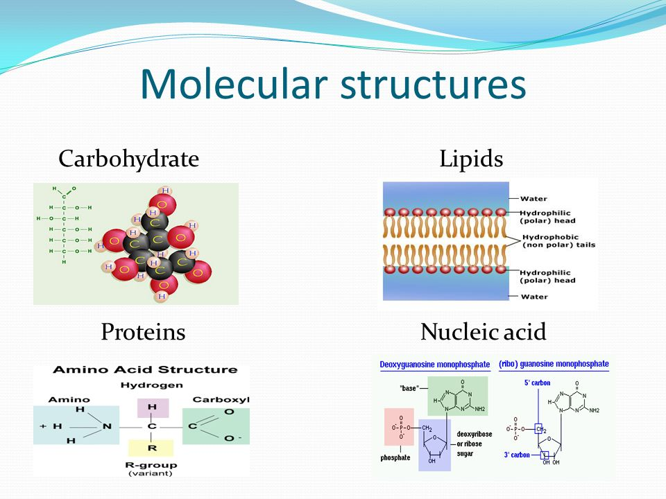 What Elements Make Up Carbohydrates Lipids Proteins And