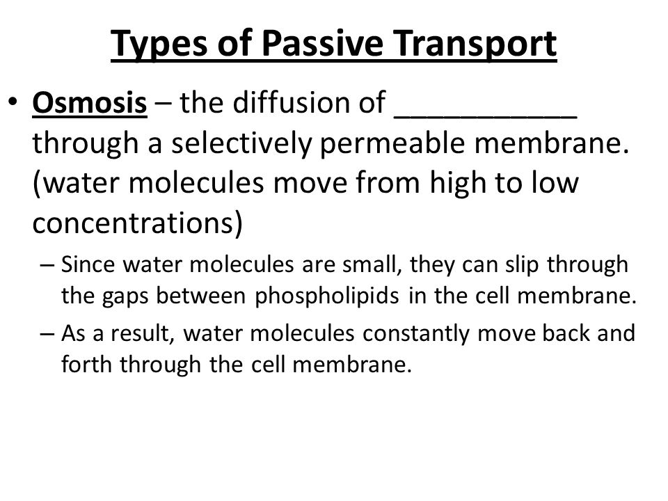 types of passive transport lexu