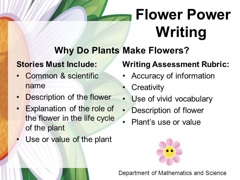 paper flower scientific name