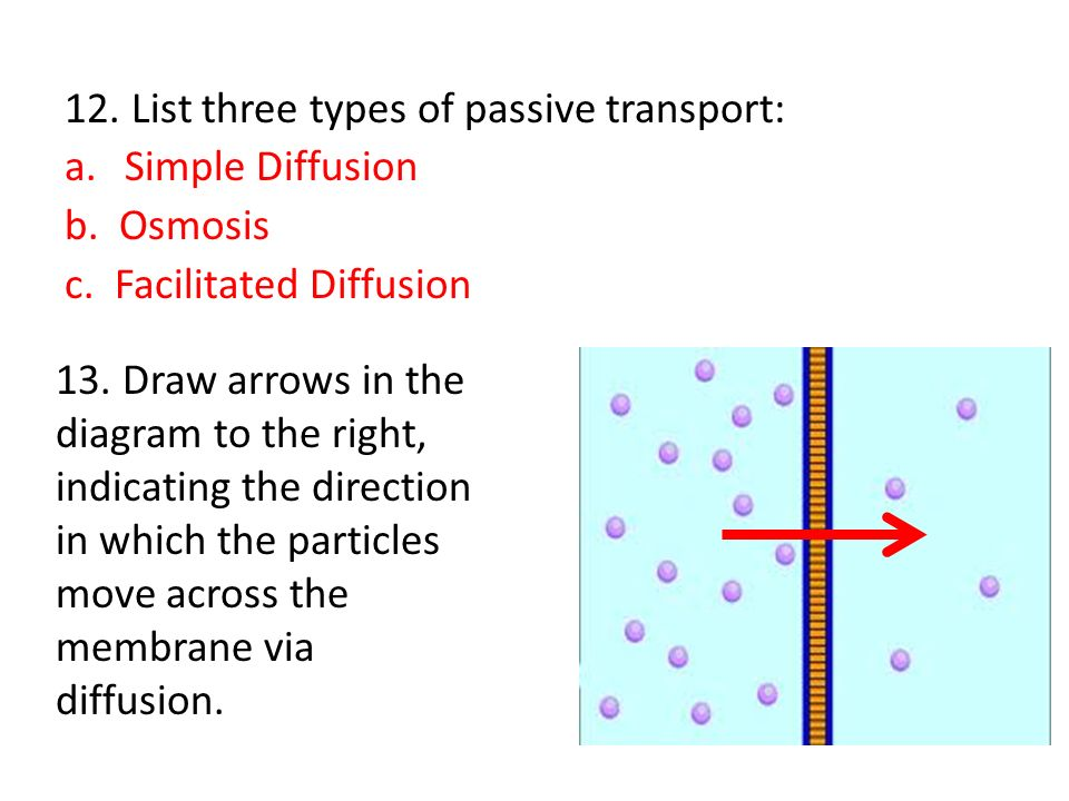 Pictures of Passive Transport Osmosis - kidskunstinfo