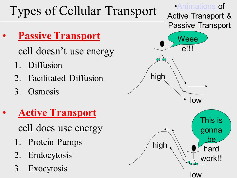 comparing passive and active transport aa aa the following table