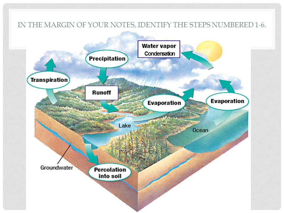 Objectives Summarize the steps of the water cycle in a diagram