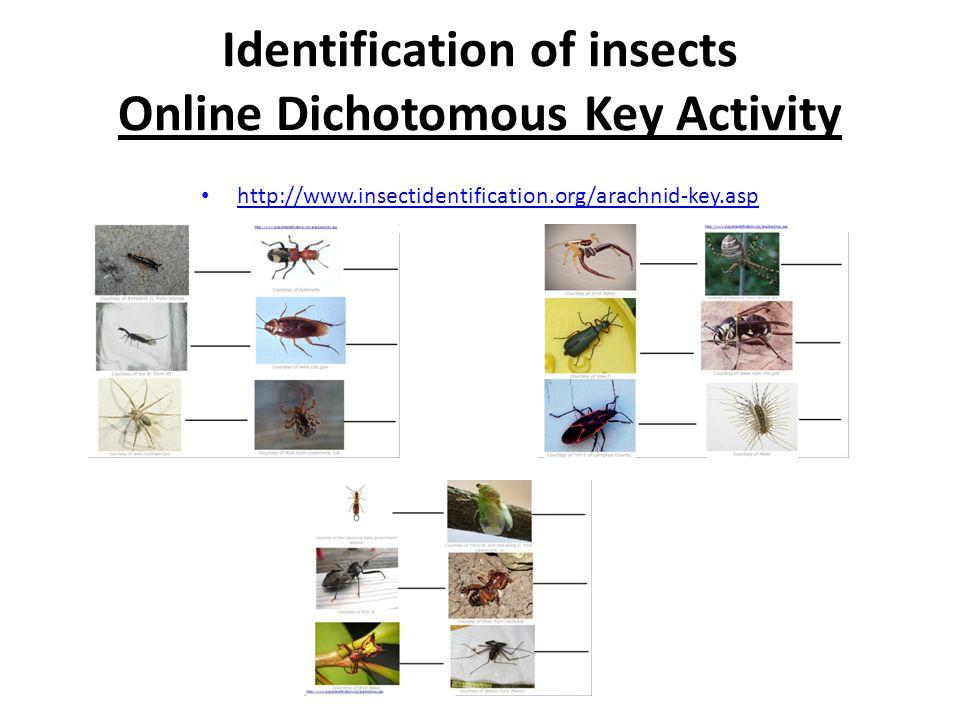 Dichotomous Keys - ppt video online download
