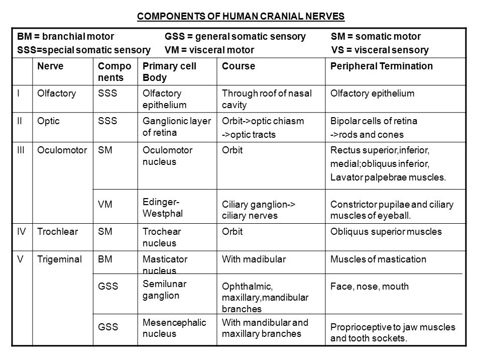 CRANIAL NERVES 12 pairs (I \u2013 XII) - ppt download
