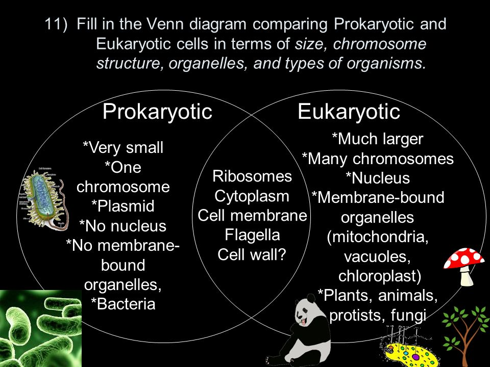 venn diagram to compare the organelles in plant and animal cells rh rus ninja80 info animal versus plant cells venn diagram of cells plant and animal cell