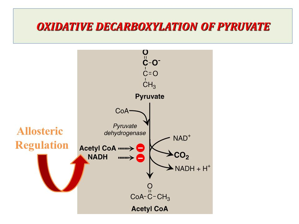Fate of Pyruvate  Citric Acid Cycle - ppt video online download