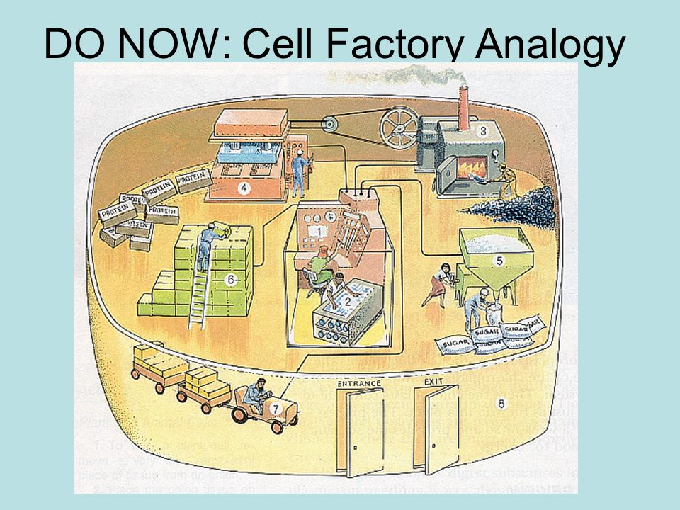 analogy of a cell - Canasbergdorfbib