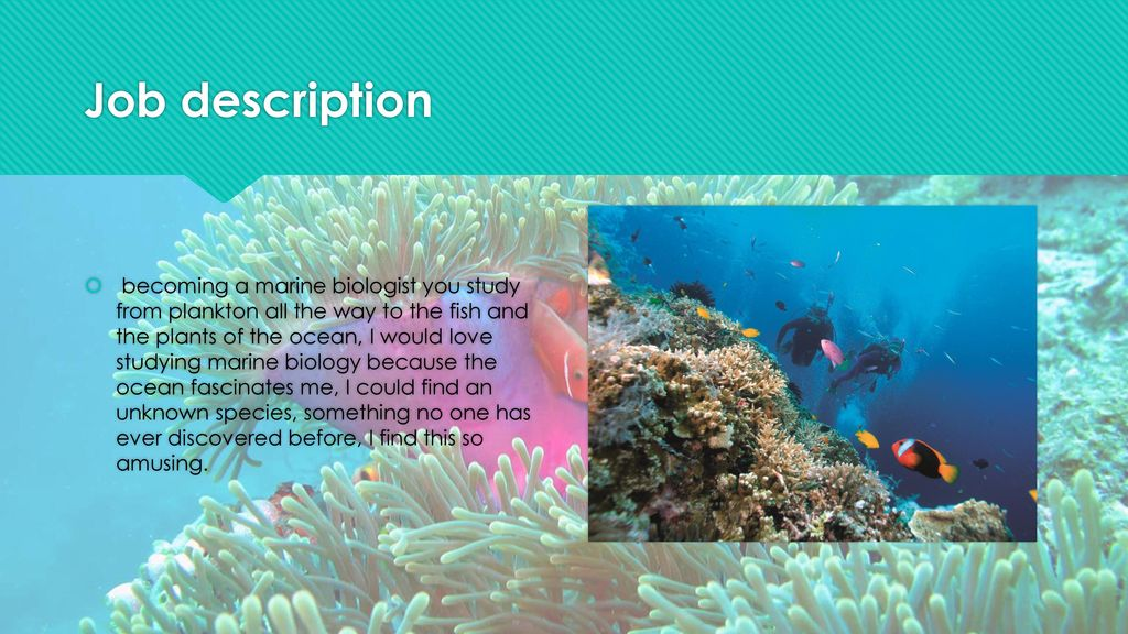My Career of Marine Biology - ppt download