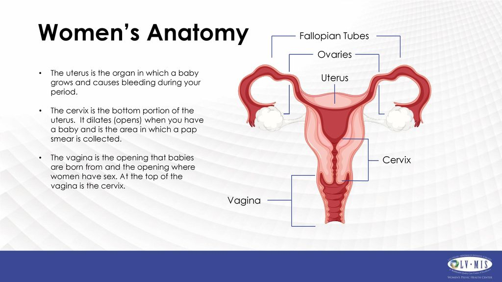 Hysterectomy for Fibroids - ppt download