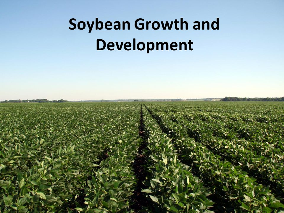 Soybean Growth and Development - ppt video online download