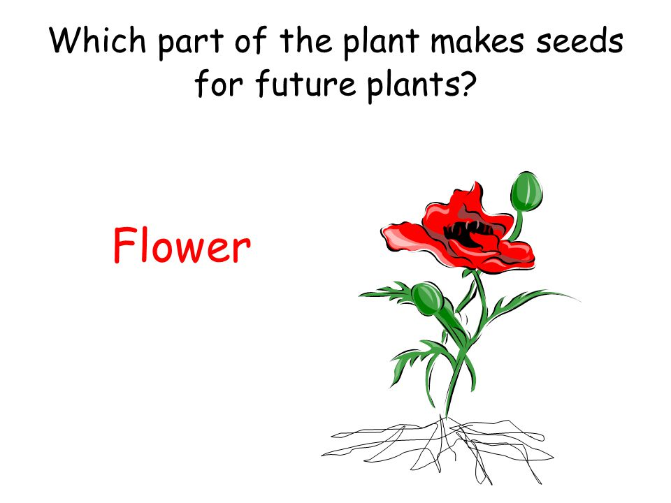 1st Grade Review of Plants - ppt video online download