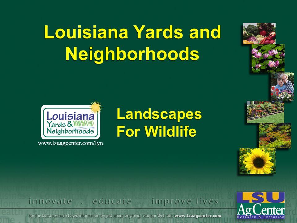 Louisiana Yards and Neighborhoods - ppt download