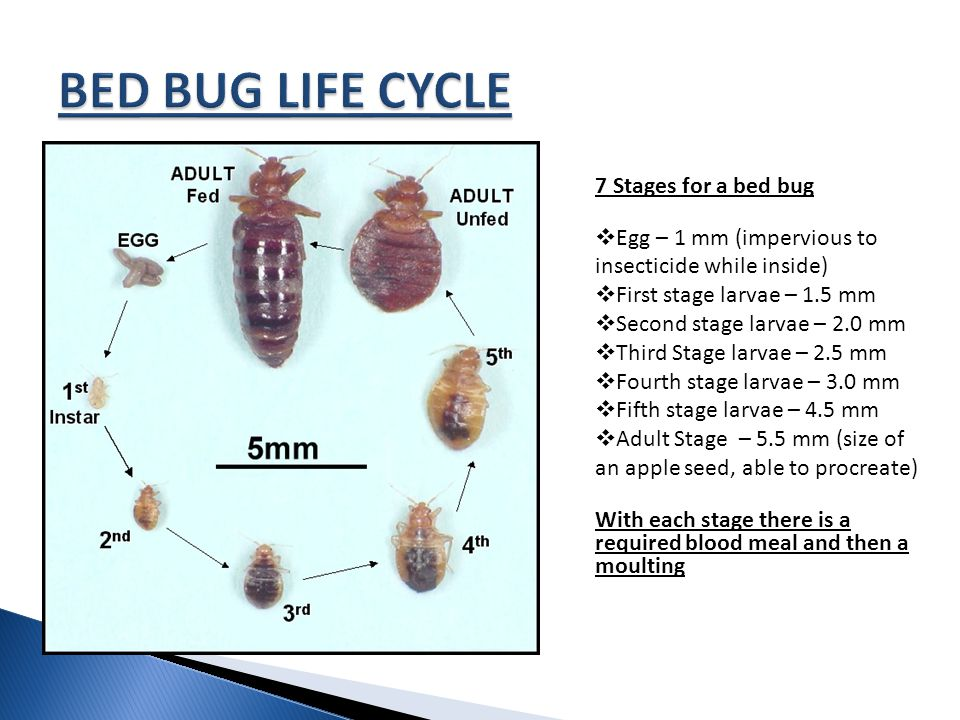 SLEEP TIGHT , DON\u0027T LET THE BED BUGS BITE\u201d - ppt video online download