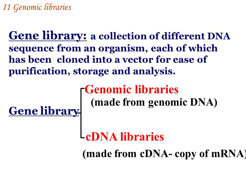 Section I Gene libraries and screening - ppt video online download