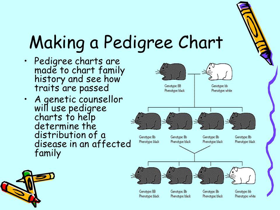 Making a Pedigree Chart - ppt download