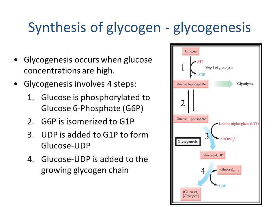 Glycogenesis - #GolfClub