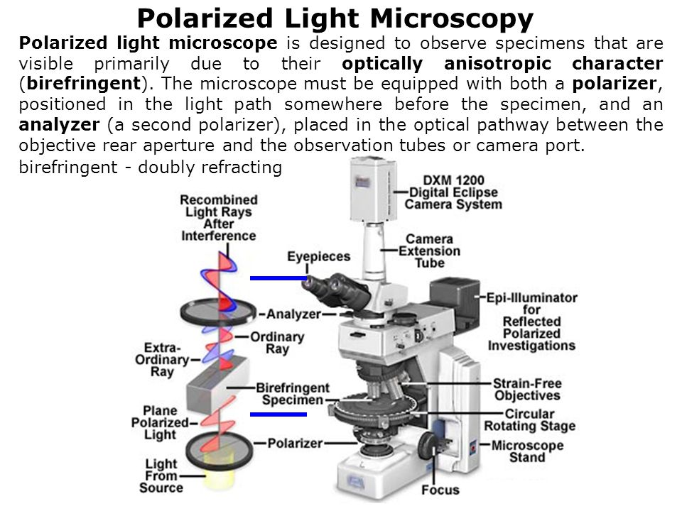 Lecture-2 Optical Microscopy - ppt video online download