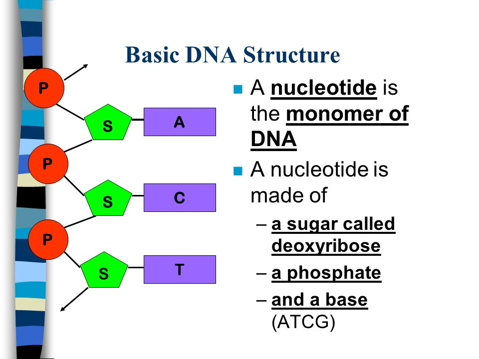 The structure of dna essay Homework Academic Writing Service
