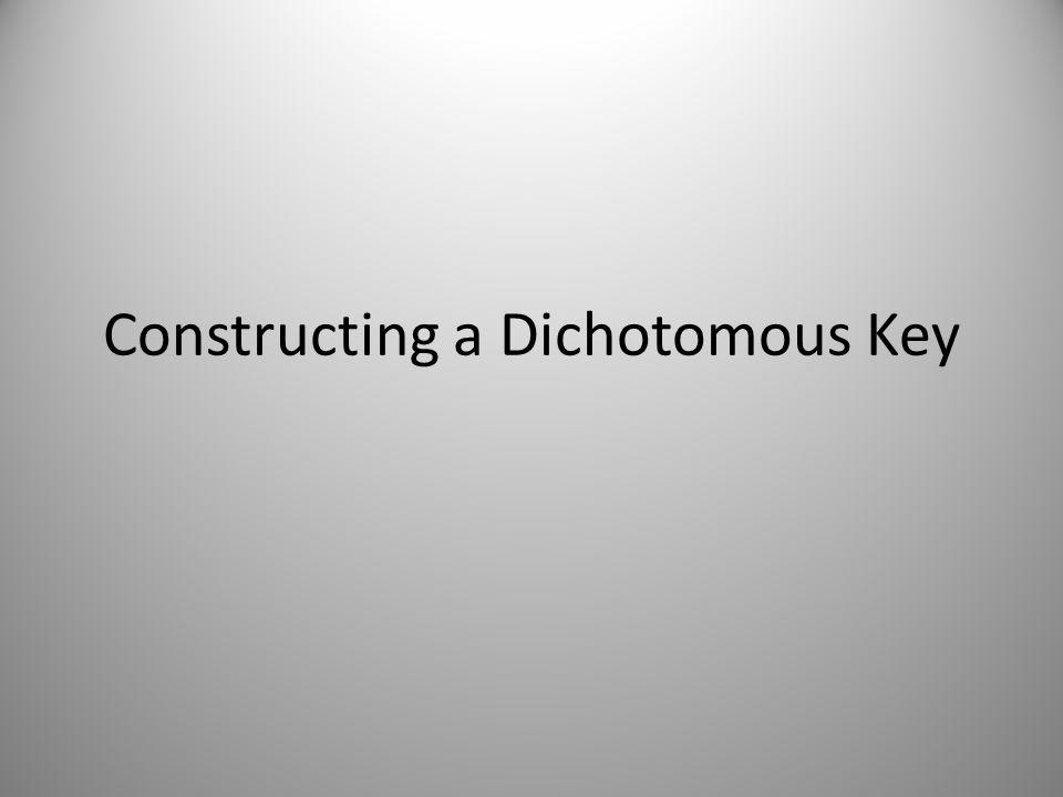 Constructing a Dichotomous Key - ppt video online download