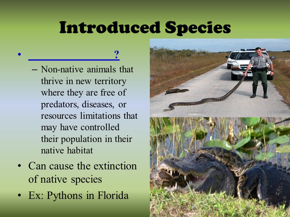 Review The Biosphere Ppt Video Online Download