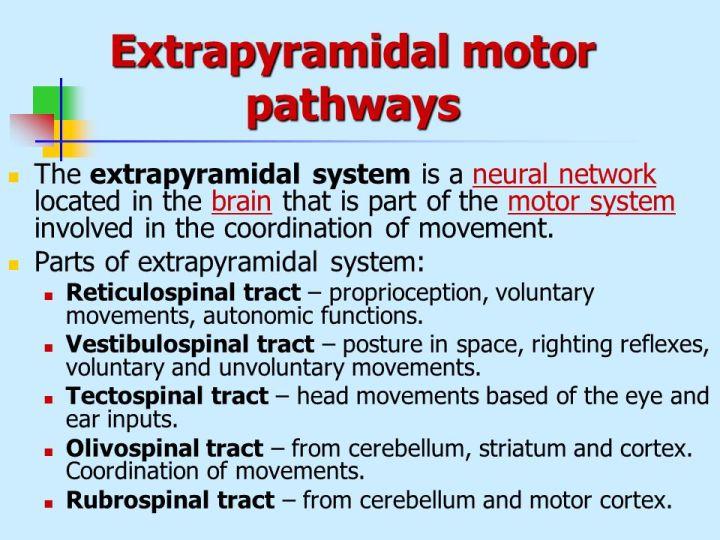 extrapyramidal motor system definition caferacersjpg com