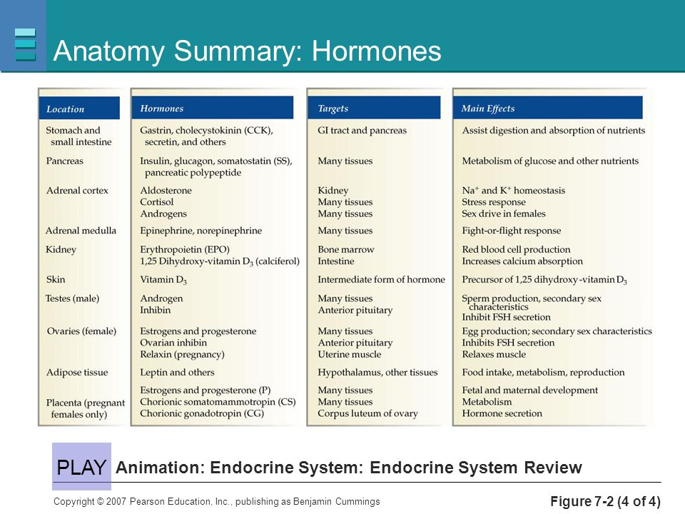 Endocrine System Function and purpose of hormones - ppt video online