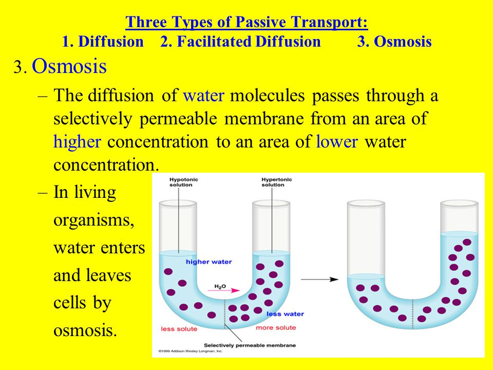 CELLS  THEIR ENVIRONMENT - ppt download
