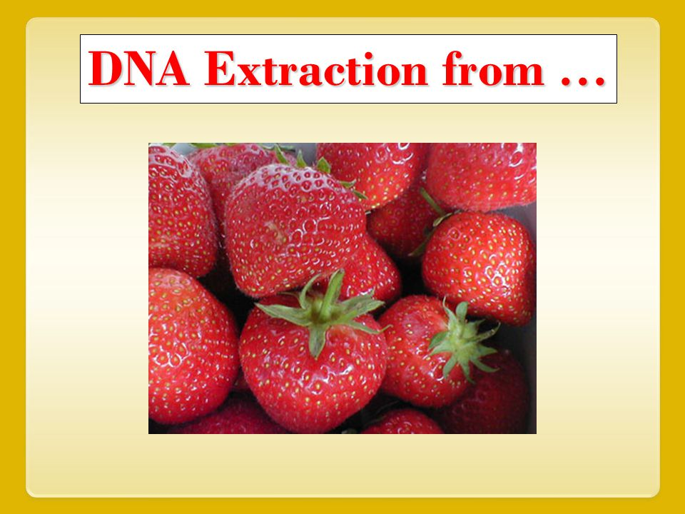 DNA Extraction from \u2026 - ppt video online download