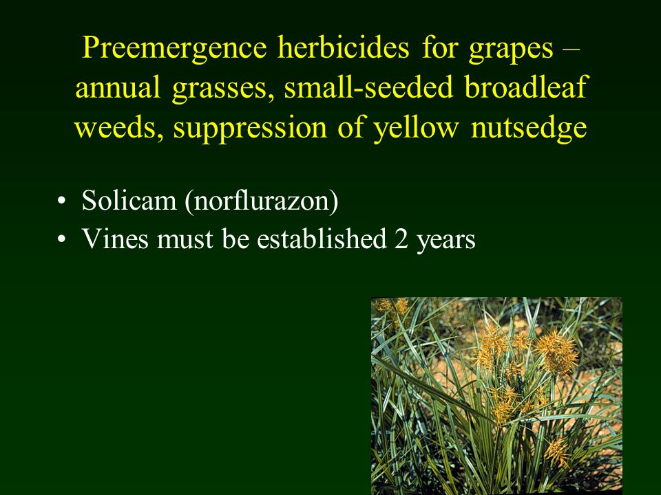 Weed and Vegetation Management in Grape Production - ppt video