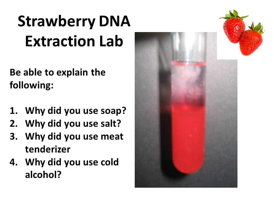 Best Popular Strawberry Dna Extraction Lab Questions