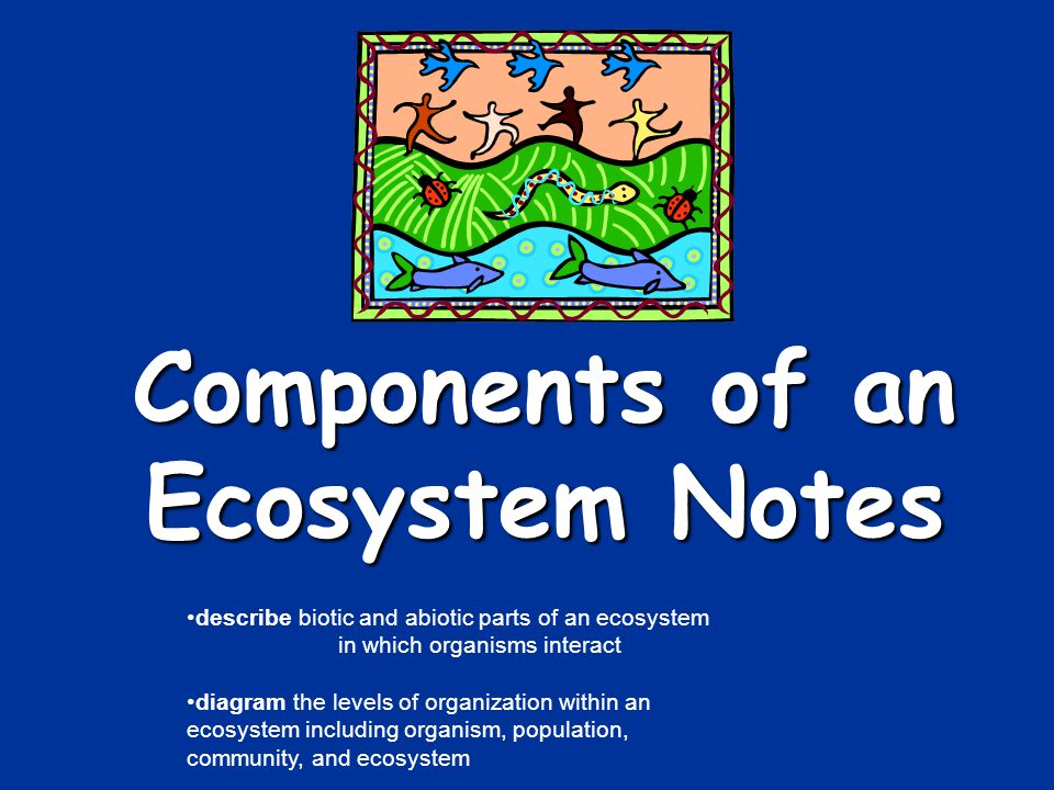 Components of an Ecosystem Notes - ppt video online download