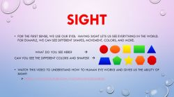 Small Of Sense Of Sight