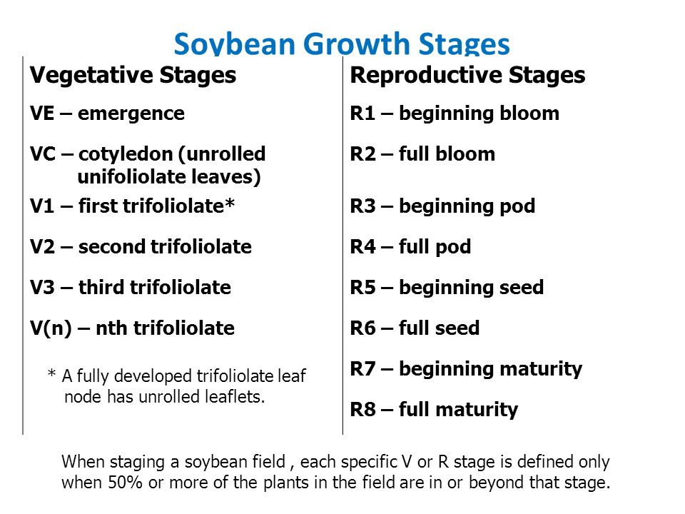 Soybean - ppt download