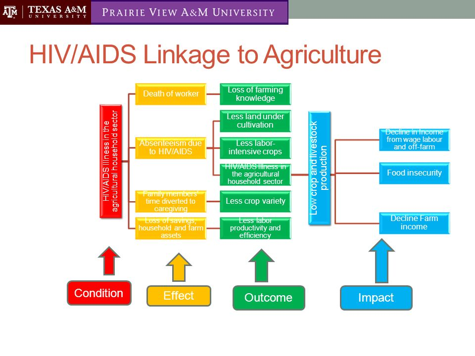 Impact of HIV/Aids and the future for African Agriculture - ppt