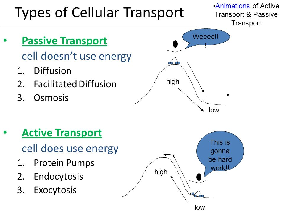 The Cell Membrane; Active  Passive Transport - ppt download