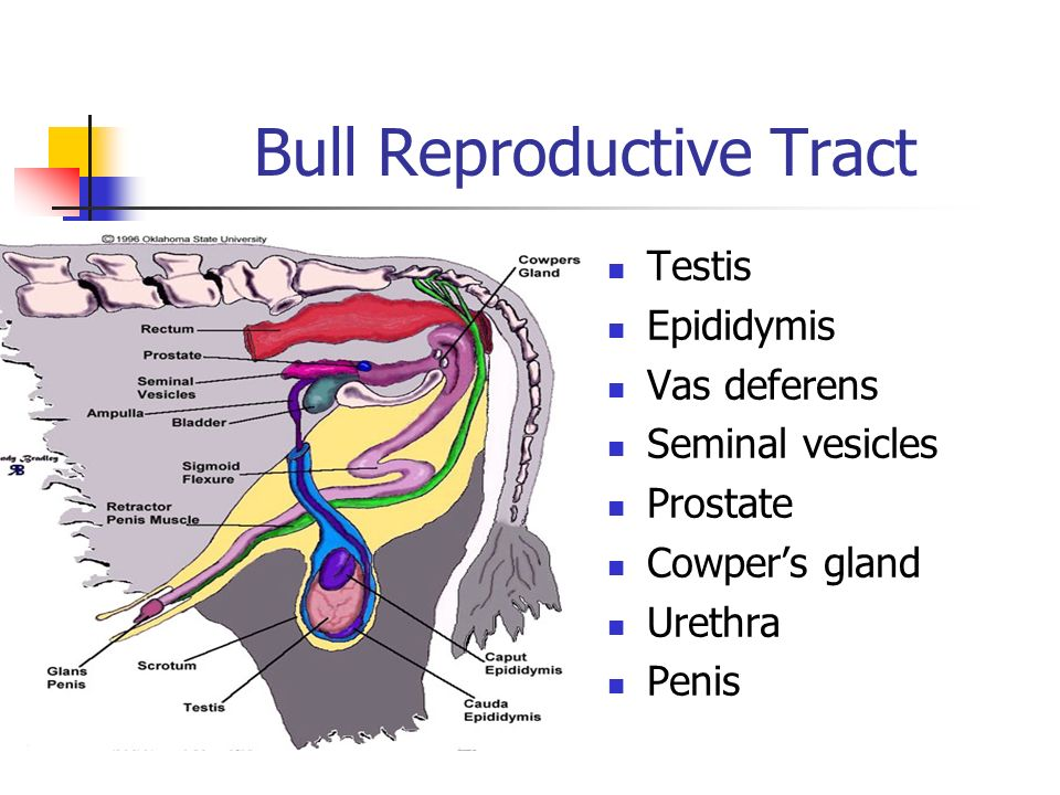 AGR Veterinary Science - ppt video online download