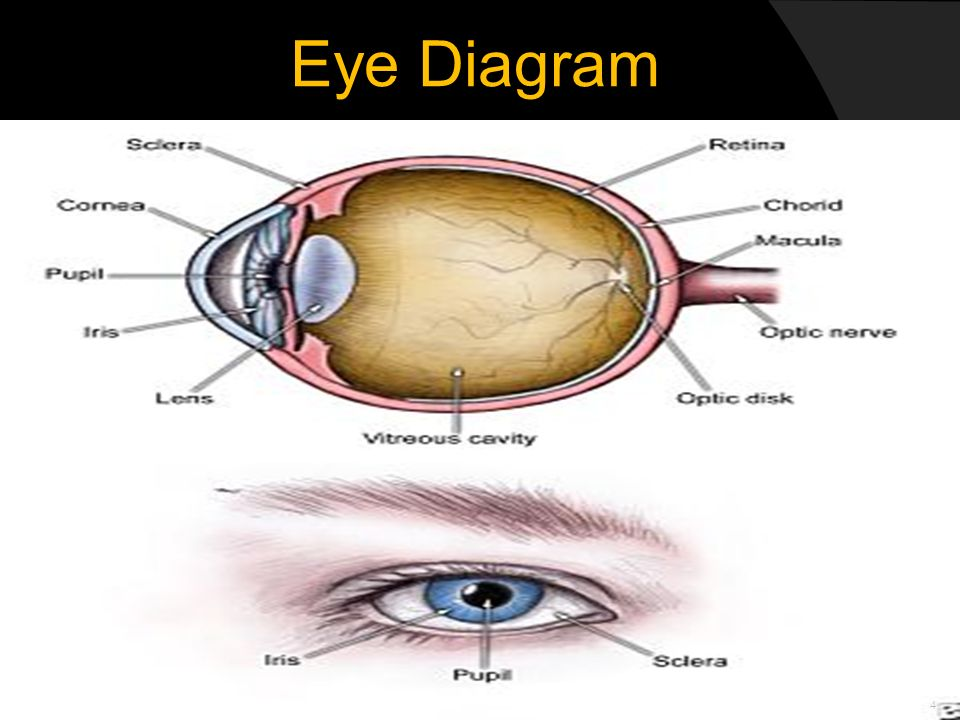 Automated Eye-Pattern Recognition Systems - ppt download