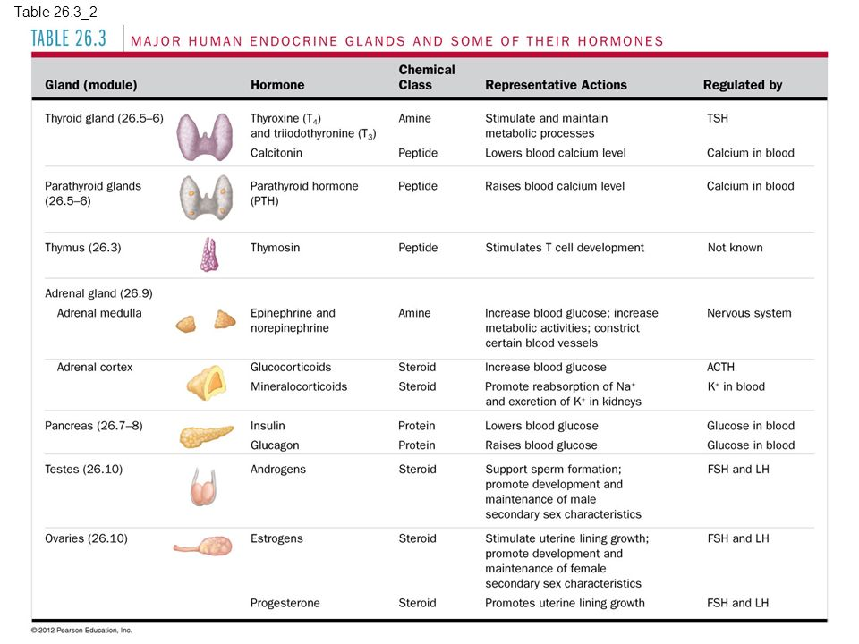 Hormones and the Endocrine System - ppt download