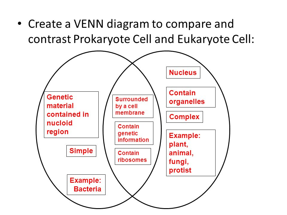 prokaryotic and eukaryotic cells similarities and differences venn