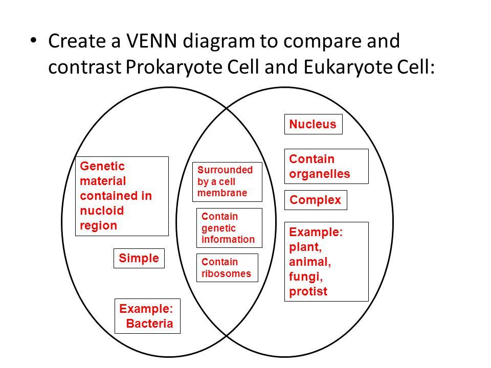 venn diagram prokaryotes and eukaryotes