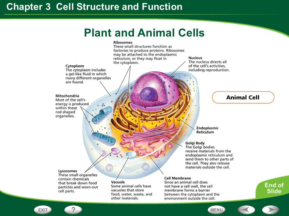 Cell organelle Term paper Academic Service zqessaymrshnvivioinfo
