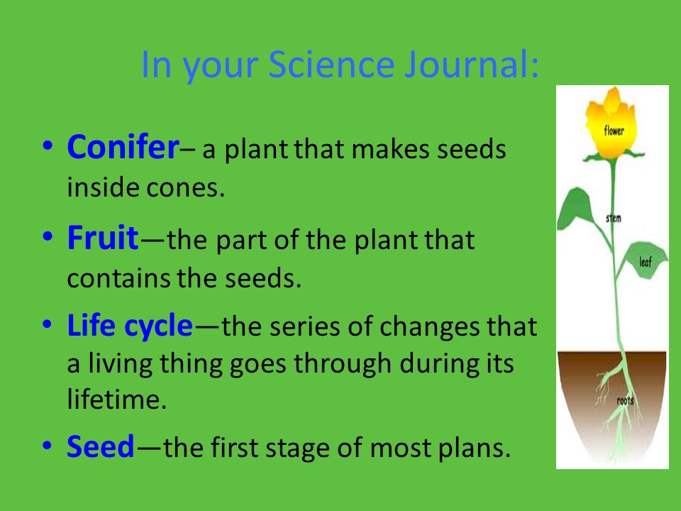 In your Science Journal - ppt video online download