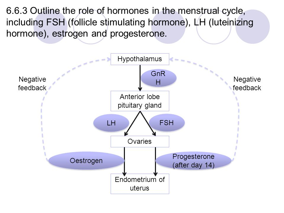 Module 6 Human Health and Physiology - ppt video online download