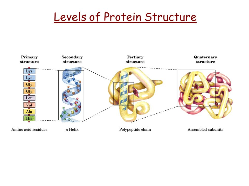 Levels of Protein Structure - ppt video online download