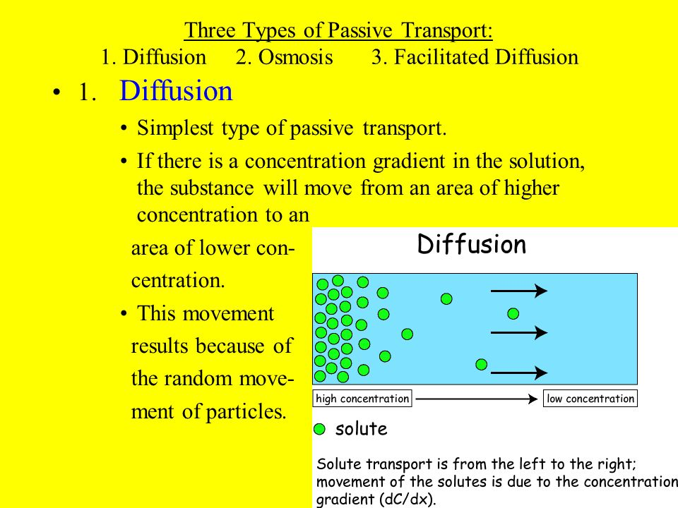 CHAPTER 8 CELLS  THEIR ENVIRONMENT - ppt video online download